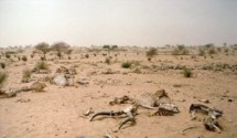 Heatwaves and Drought